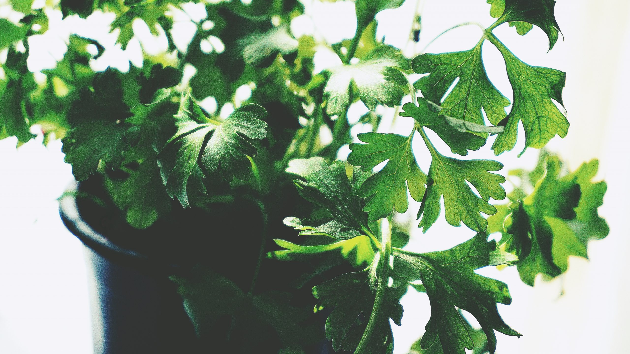 green-leafed-plant-1746410