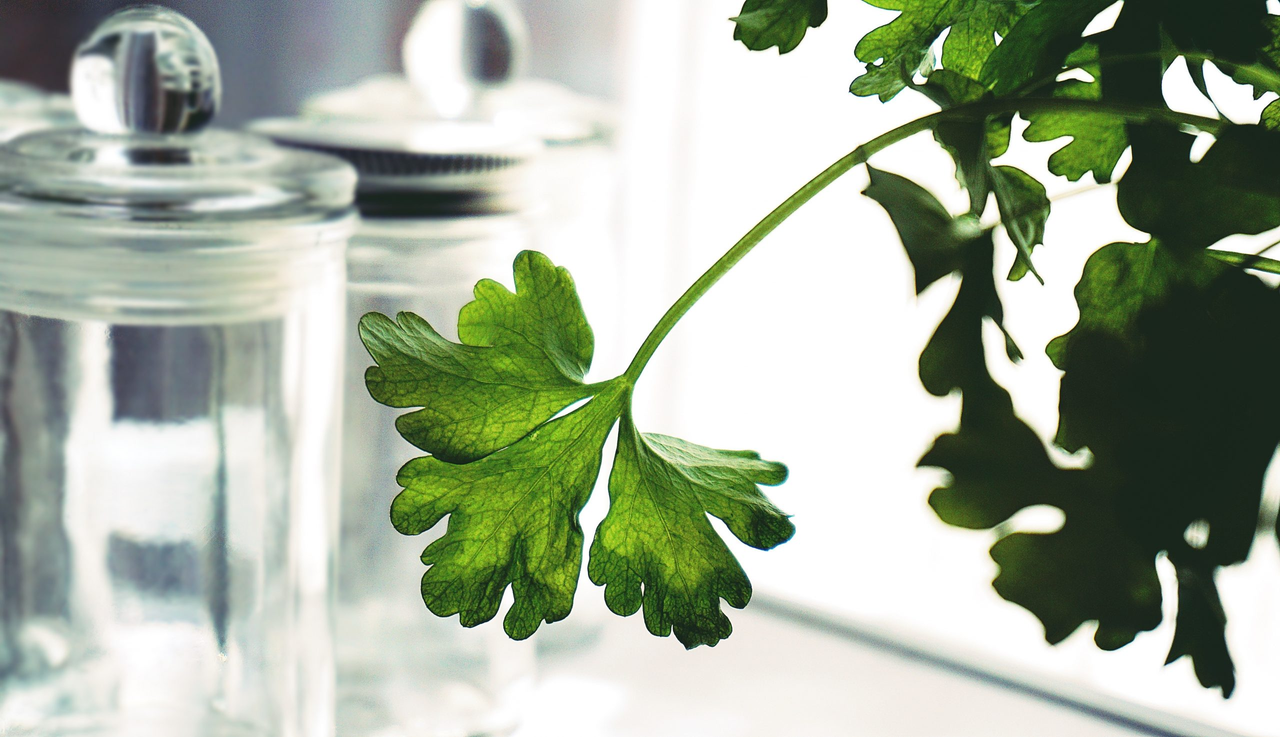 parsley-1309426
